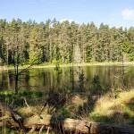 Naturschutzgebiet, Fürstenberg
